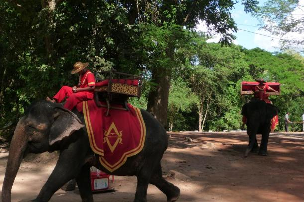 blog éléphants