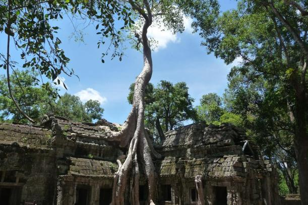 Blog Ta Phrom et la jungle