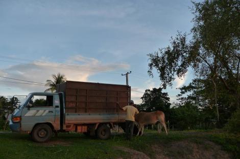 Camion à vache