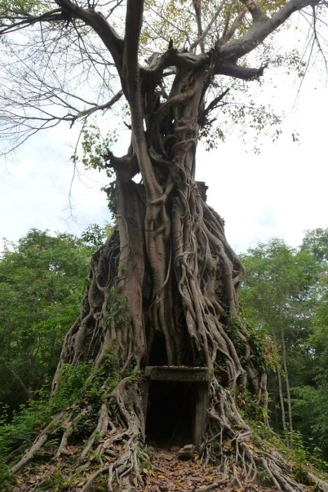 arbre-pousse-sur-temple