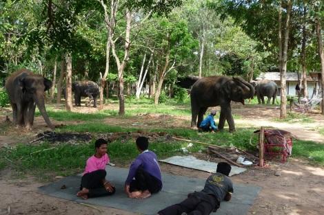 Petite sieste reposante à l'ombre des arbres et des éléphants