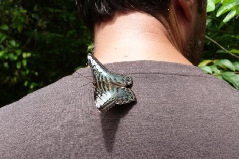 Aurel s'est senti pousser des ailes.