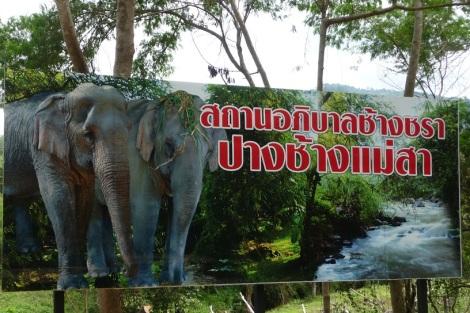 Baigne-toi avec les éléphants