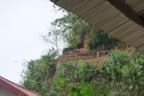 cochons-sur-leur-terrasse