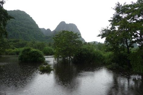 rizières-inondées