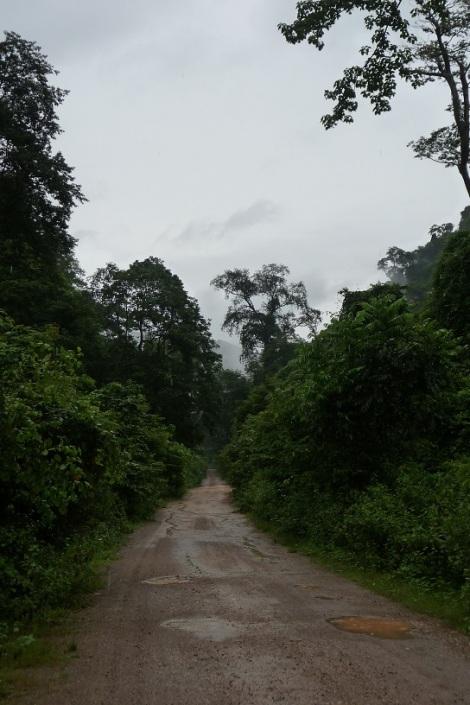 Une jungle luxuriante