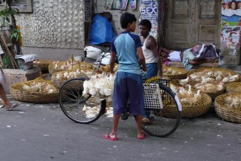 Blog vélo et grappes de poulet