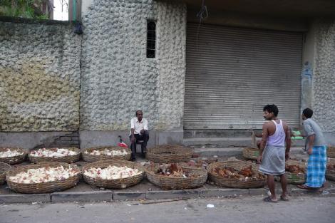 blog vendeur de poulets
