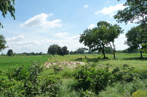 A la recherche de paysages champêtres dans ce genre, voyez-vous ?