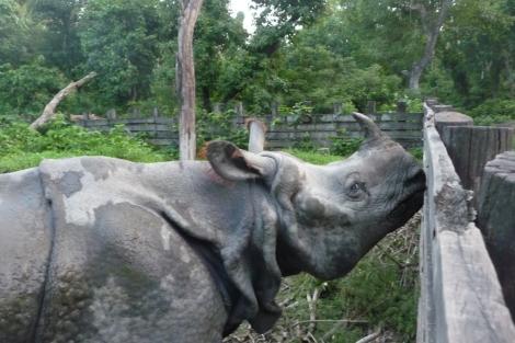 Salut le rhino