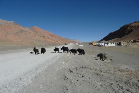 29-le-troupeau-de-yak