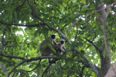 9-des-singes-intrigues