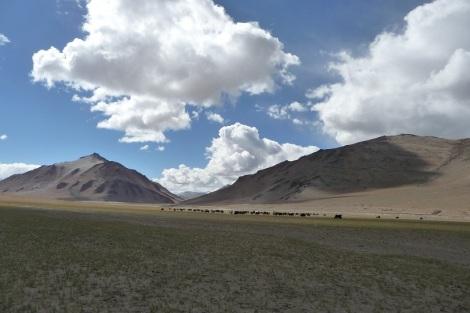 Blog champ de yaks
