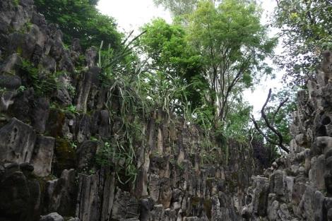 Blog Jungle