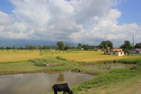 blog-premières-impressions-népalaises