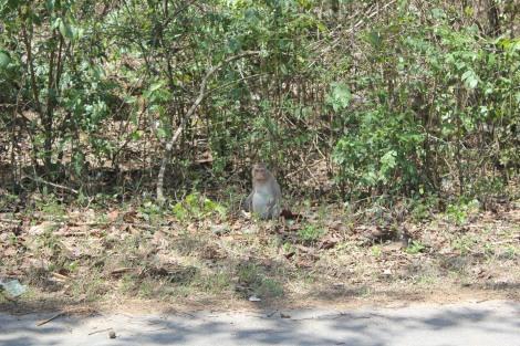 Un singe Thaï protégé par un parc naturel trop cher pour nous