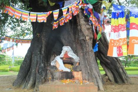 Un endroit que Maya Devi aimait bien