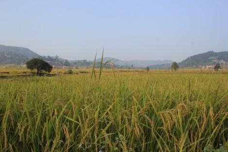 riz-sur-la-route